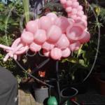 ballondecoratie-verjaardag-11.jpg